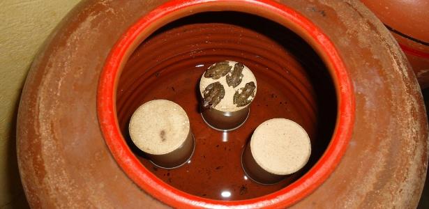 MP da Paraíba encontra rãs em filtro de água em escola estadual