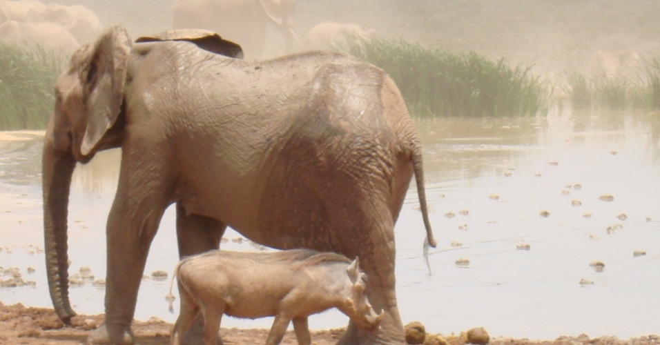 Addo Elephant National Park é um dos santuários de elefantes e está situado a 72 km da cidade de Porto Elizabeth. Inaugurado em 1931, abriga também rinocerontes, búfalos e antílopes.
