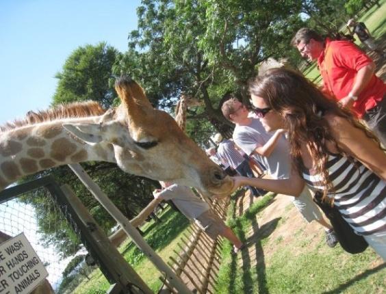 Rafaella Lobo com girafas em Joanesburgo